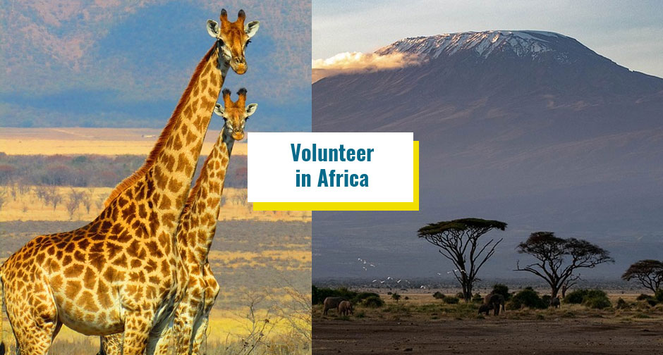 International Volunteer in Africa