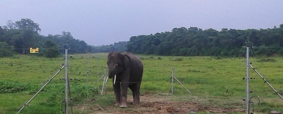 volunteer work for elephants