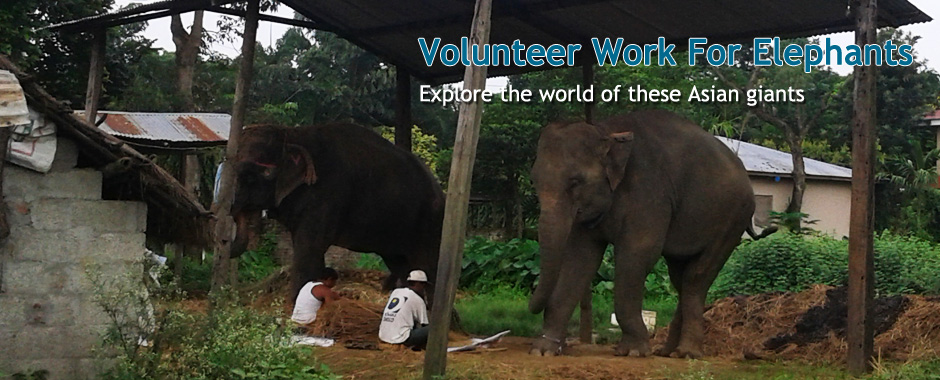volunteer works for elephants in nepal