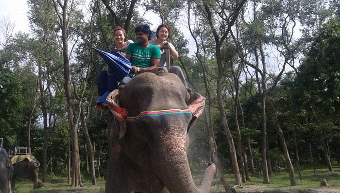 Why Volunteer With Elephants